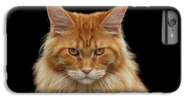 Cat iPhone 6s Plus Case - Angry Ginger Maine Coon Cat Gazing On Black Background by Sergey Taran
