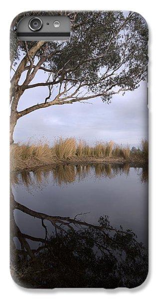 Dam IPhone 6s Plus Case by Linda Lees