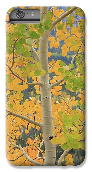 IPhone 6s Plus Case featuring the photograph Aspen Watching You by David Chandler