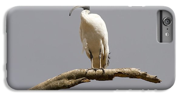 Ibis iPhone 6s Plus Case - Australian White Ibis Perched by Mike  Dawson