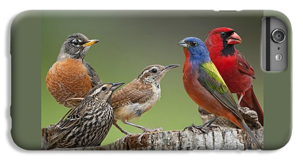 Wren iPhone 6s Plus Case - Backyard Buddies by Bonnie Barry