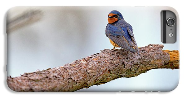 Barn Swallow On Assateague Island IPhone 6s Plus Case