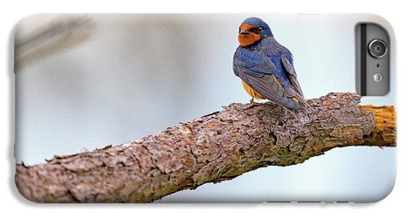 Barn Swallow On Assateague Island IPhone 6s Plus Case by Rick Berk