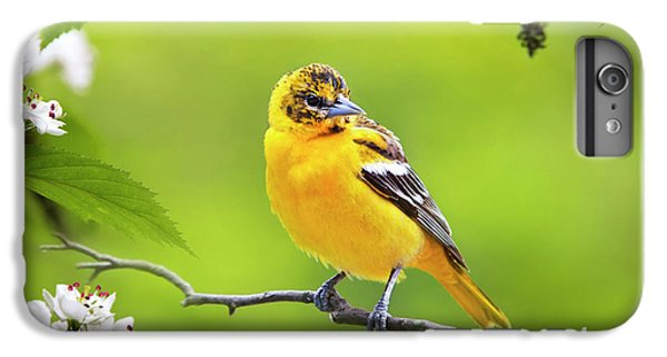 Bird And Blooms - Baltimore Oriole IPhone 6s Plus Case
