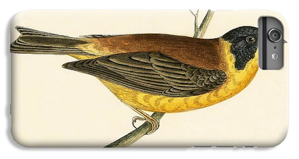 Black Headed Bunting IPhone 6s Plus Case by English School