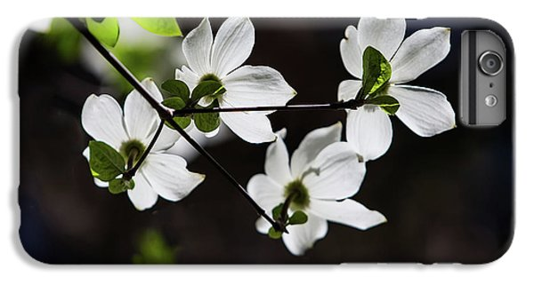 Yosemite National Park iPhone 6s Plus Case - Blooming Dogwoods In Yosemite 4 by Larry Marshall
