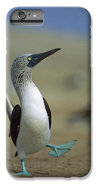 Boobies iPhone 6s Plus Case - Blue-footed Booby Sula Nebouxii by Tui De Roy