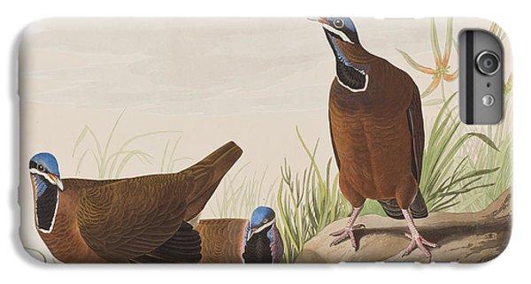 Blue Headed Pigeon IPhone 6s Plus Case by John James Audubon