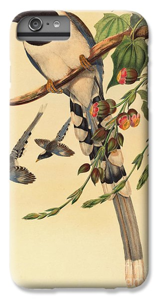 Magpies iPhone 6s Plus Case - Blue Magpie, Urocissa Magnirostris by John Gould