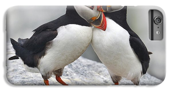 Puffin iPhone 6s Plus Case - Bonded And Banded by Tony Beck