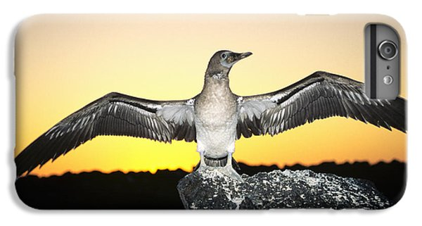 Boobies iPhone 6s Plus Case - Booby At Sunset by Dave Fleetham - Printscapes