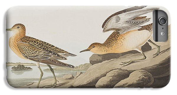 Sandpiper iPhone 6s Plus Case - Buff Breasted Sandpiper by John James Audubon