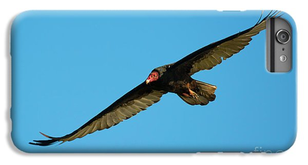 Buzzard Circling IPhone 6s Plus Case by Mike Dawson