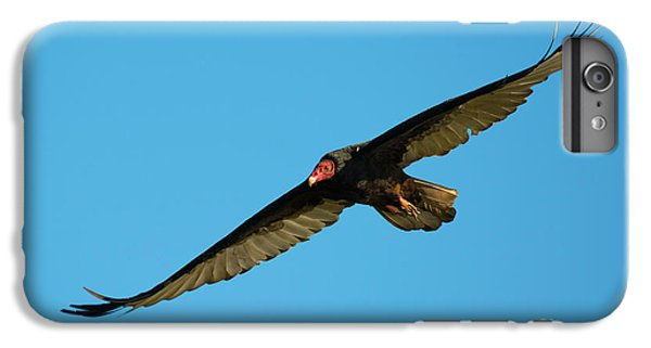 Buzzard iPhone 6s Plus Case - Buzzard Circling by Mike Dawson