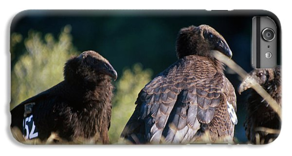 California Condors IPhone 6s Plus Case by Soli Deo Gloria Wilderness And Wildlife Photography