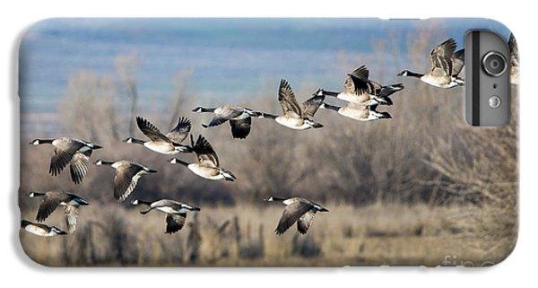 Canada  Geese Flock IPhone 6s Plus Case