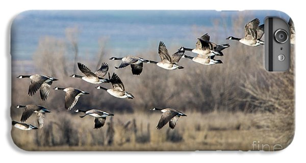 Canada  Geese Flock IPhone 6s Plus Case by Mike Dawson