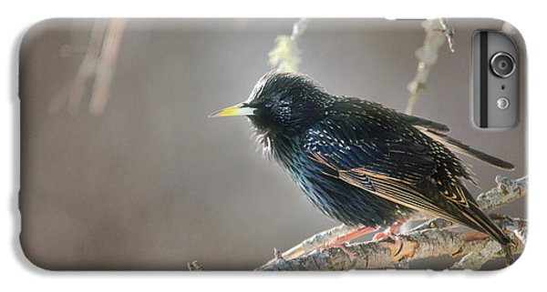 Starlings iPhone 6s Plus Case - Catch The Morning Light by Susan Capuano