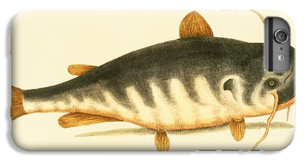 Catfish IPhone 6s Plus Case by Mark Catesby