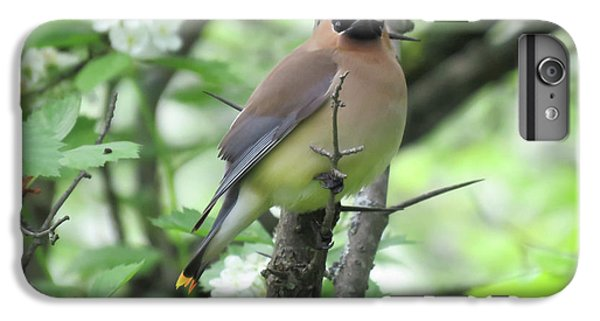 Cedar Wax Wing IPhone 6s Plus Case by Alison Gimpel