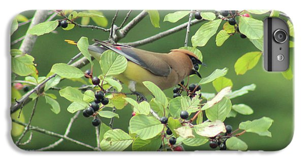 Cedar Waxwing Eating Berries IPhone 6s Plus Case by Maili Page