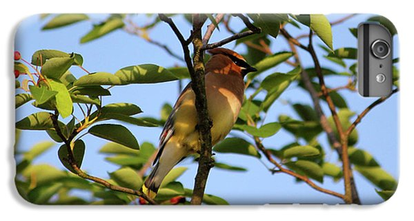 Cedar Waxwing IPhone 6s Plus Case by Mark A Brown