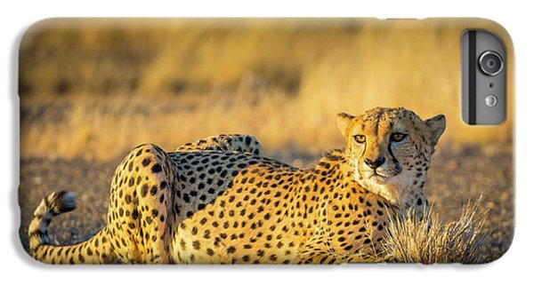 Cheetah Portrait IPhone 6s Plus Case