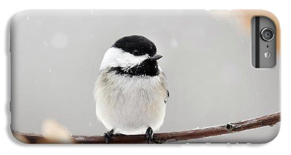 Chickadee Bird In Snow IPhone 6s Plus Case by Christina Rollo