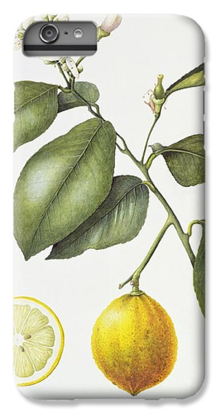 Citrus Bergamot IPhone 6s Plus Case