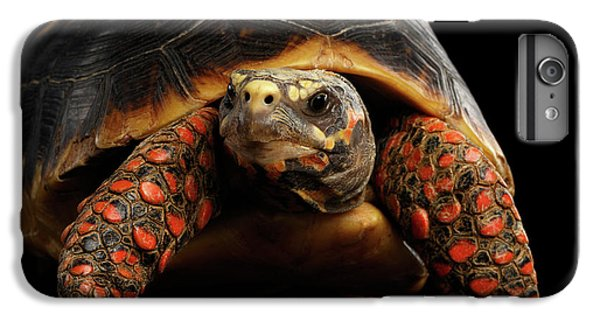 Close-up Of Red-footed Tortoises, Chelonoidis Carbonaria, Isolated Black Background IPhone 6s Plus Case