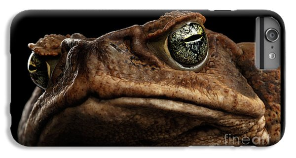 Closeup Cane Toad - Bufo Marinus, Giant Neotropical Or Marine Toad Isolated On Black Background IPhone 6s Plus Case