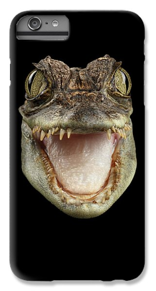 Closeup Head Of Young Cayman Crocodile , Reptile With Opened Mouth Isolated On Black Background, Fro IPhone 6s Plus Case