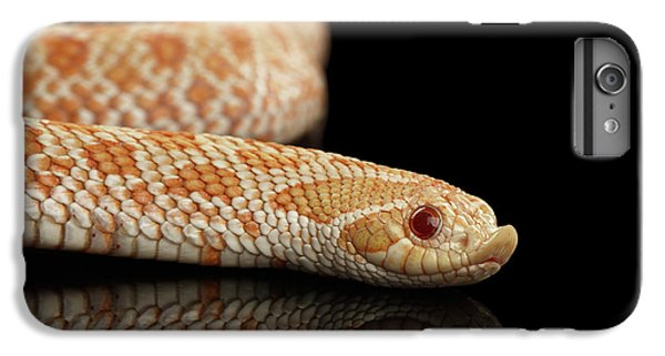 Closeup Pink Pastel Albino Western Hognose Snake, Heterodon Nasicus Isolated On Black Background IPhone 6s Plus Case by Sergey Taran