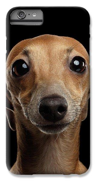 Dog iPhone 6s Plus Case - Closeup Portrait Italian Greyhound Dog Looking In Camera Isolated Black by Sergey Taran