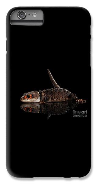 Closeup Red-eyed Crocodile Skink, Tribolonotus Gracilis, Isolated On Black Background IPhone 6s Plus Case by Sergey Taran