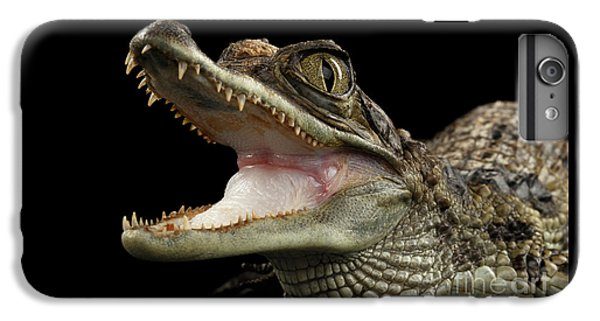 Closeup Young Cayman Crocodile, Reptile With Opened Mouth Isolated On Black Background IPhone 6s Plus Case