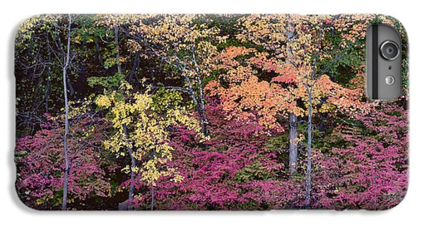 Colorful Fall Foliage IPhone 6s Plus Case