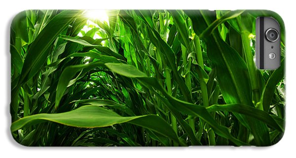 Corn Field IPhone 6s Plus Case by Carlos Caetano