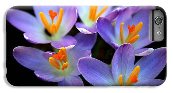 IPhone 6s Plus Case featuring the photograph Crocus Aglow by Jessica Jenney