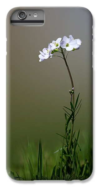 Cuckoo Flower IPhone 6s Plus Case by Ian Hufton