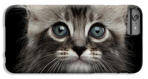 Cat iPhone 6s Plus Case - Cute American Curl Kitten With Twisted Ears Isolated Black Background by Sergey Taran