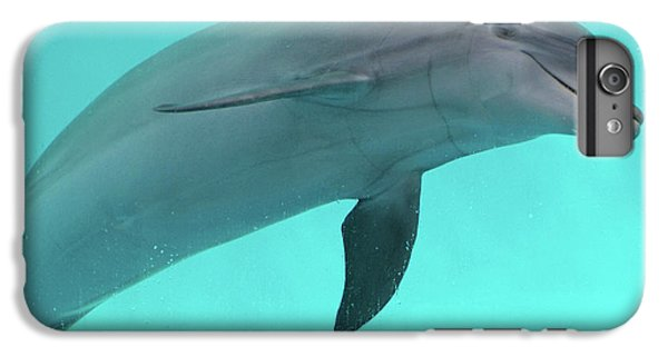 Dolphin IPhone 6s Plus Case by Sandy Keeton