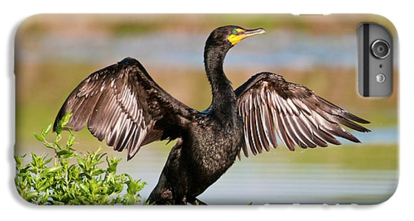 Double-crested Cormorant IPhone 6s Plus Case