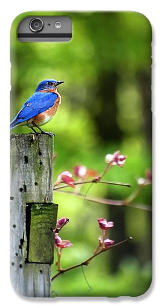 Eastern Bluebird IPhone 6s Plus Case by Christina Rollo