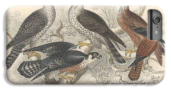 Falcons IPhone 6s Plus Case by Dreyer Wildlife Print Collections