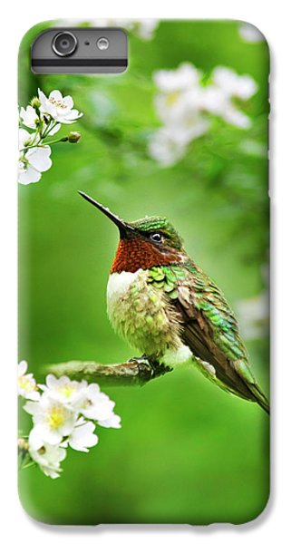 Fauna And Flora - Hummingbird With Flowers IPhone 6s Plus Case
