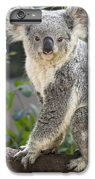 Female Koala IPhone 6s Plus Case by Jamie Pham