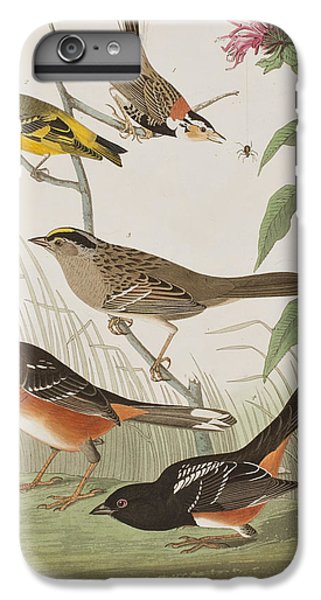 Finches IPhone 6s Plus Case