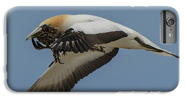 IPhone 6s Plus Case featuring the photograph Gannets 1 by Werner Padarin
