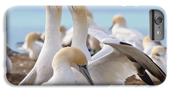Gannets IPhone 6s Plus Case by Werner Padarin
